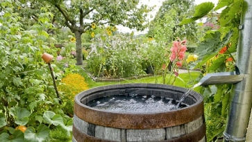 How To Save Water In The Yard